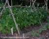 Photo of mulch raw pinebark