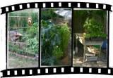 better vegetable gardening.com slideshow library