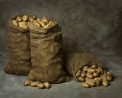 Photo of storing potatoes