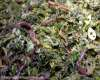 Photo of vermicompost devour organic