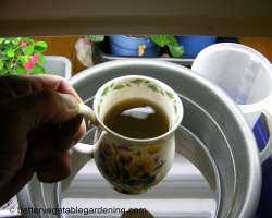 Photo of Worm Tea