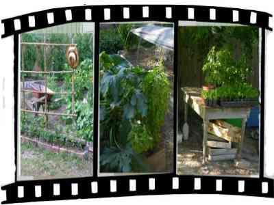 Siembra de hortalizas de semillas y plántulas - maniquíes