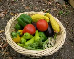 Photo of warm season vegetables