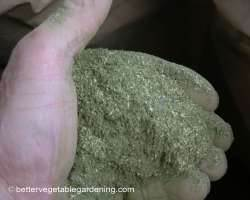 handful of alfalfa meal