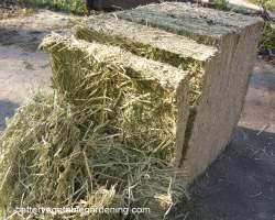 Bale of alfalfa hay