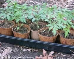 Photo of bio-degradeable coconut coir pots