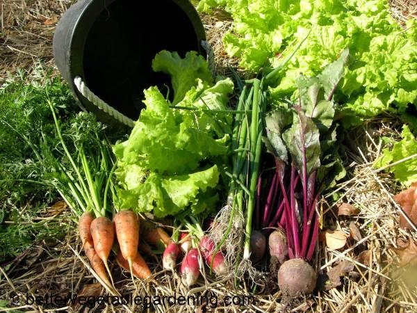 Variety of cool-season-vegetables