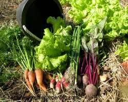 Attractive Variety Of Cool Season Vegetables