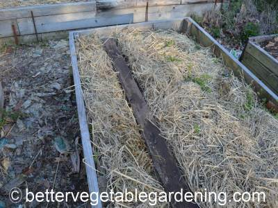 Covering the carrot seedbed with a board is a way of protecting seeds from being washed away in areas that experience heavy rainfall at sowing time