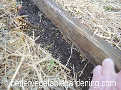 Check regularly for young carrot seedlings emerging and remove the board when they do