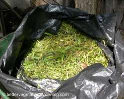 Photo of how to compost greens
