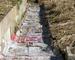 Photo of paper-mulch-newspaper-weed-barrier-path