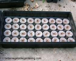 Photo of peat-pellets-original-tray
