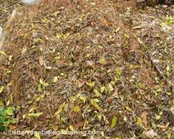 Photo of pine-straw-mulch-mixed-leaves