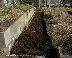 Photo of using pinebark to mulch walkways in vegetable garden