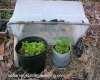 Photo of seedling shelter and light