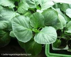 Photo of seedling fertilizer