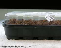 Photo of starting seeds Propagating dome