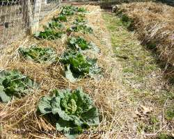 Merveilleux Different Types Of Mulch For The Vegetable Gardens
