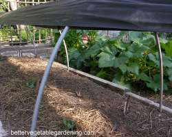 Photo of using shade cloth to shade newly transplanted seedlings