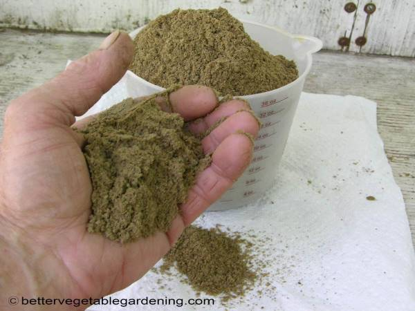 Handful of feather-meal-fertilizer