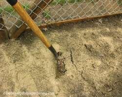 Photo of preparing garden for transplanting seedlings using banding fertilizer method