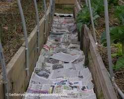 Photo of pine-straw-mulch-path-paper