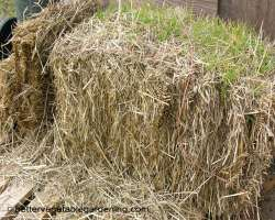 Photo of  straw mulch